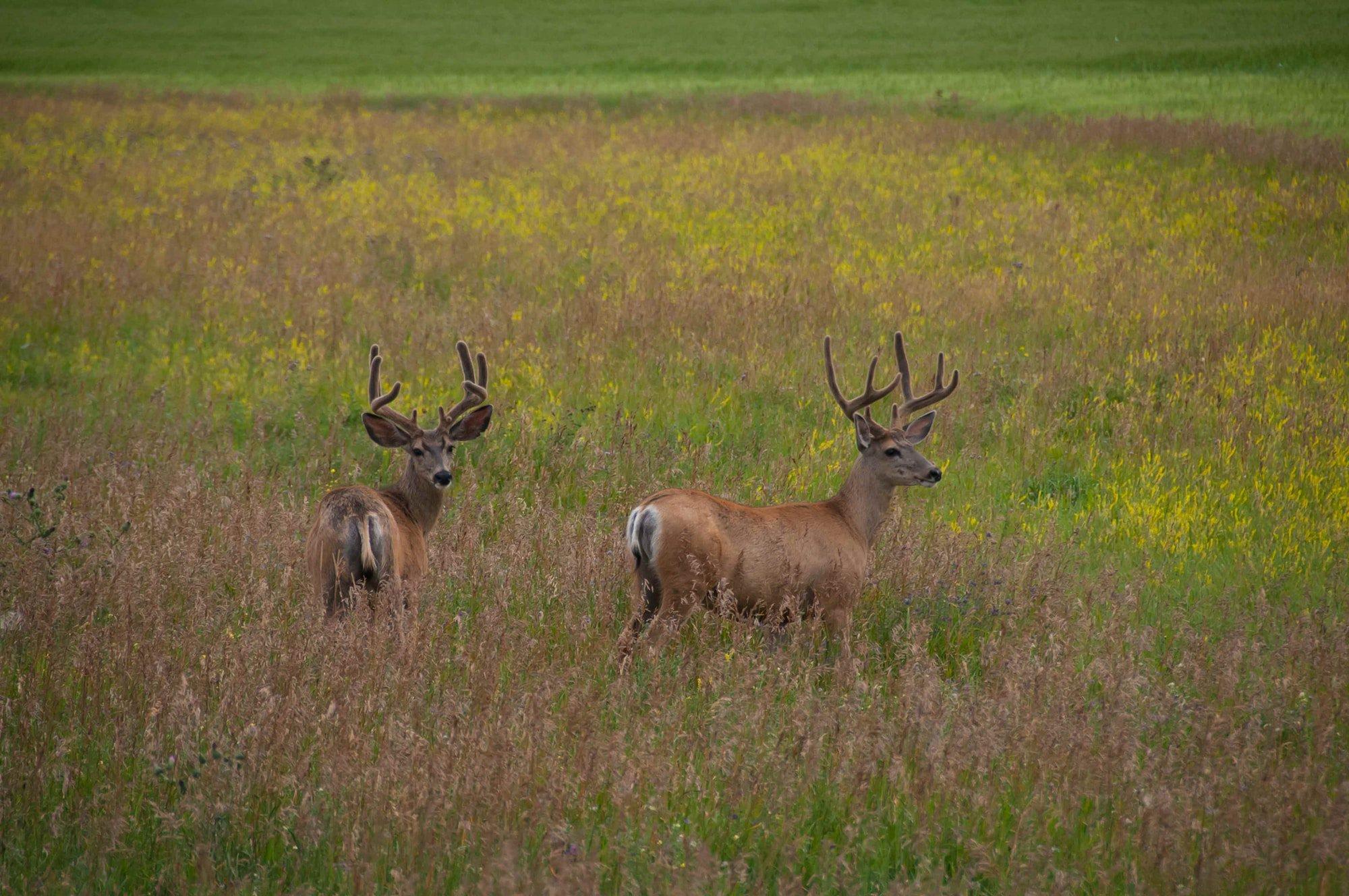 Jagd-Haftpflicht
