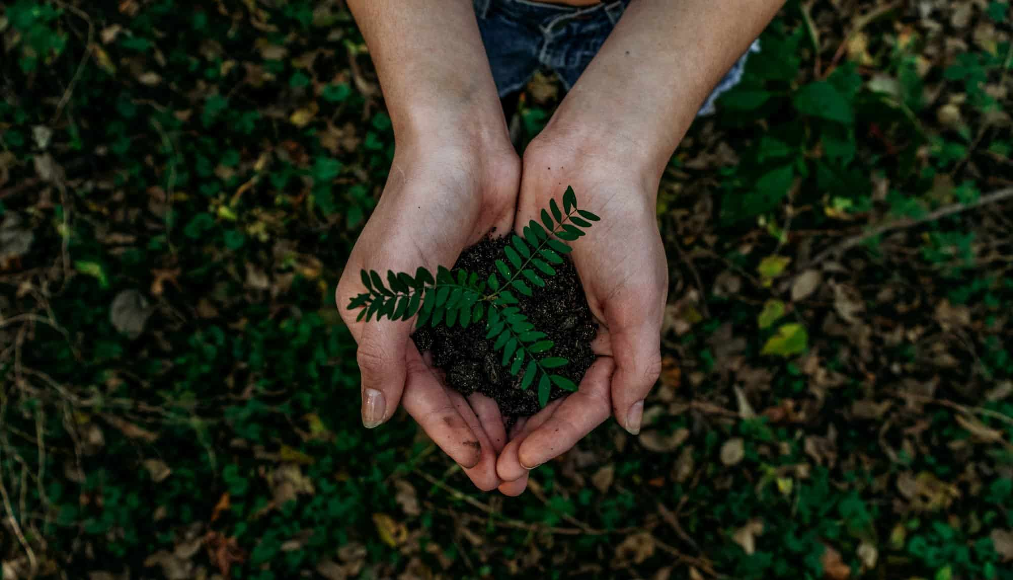 Die GrüneRente - Nachhaltigkeit und betriebliche Altersversorgung