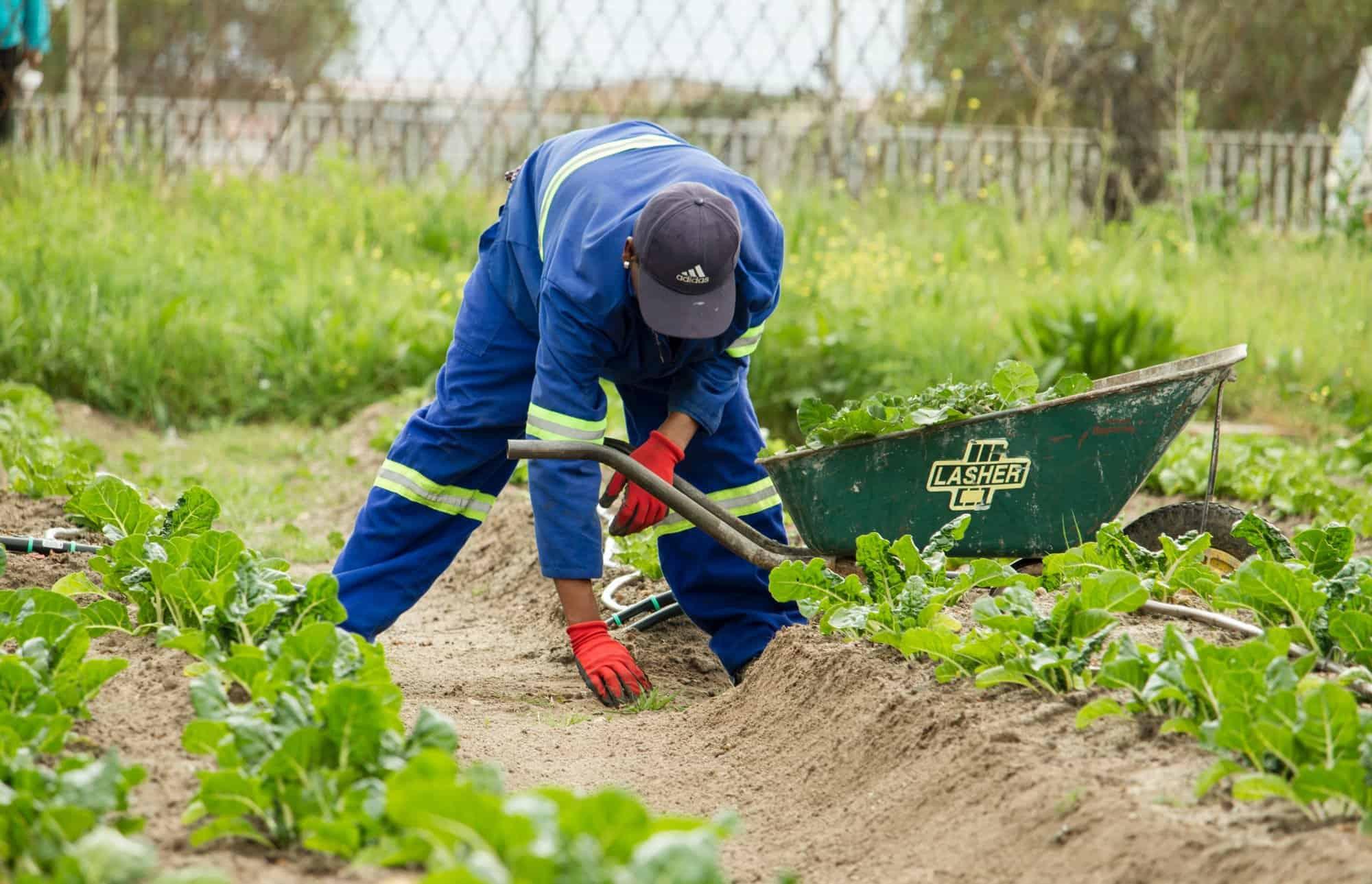 Ohne Versicherungsschutz bei Gartenarbeiten